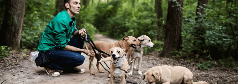 The Rapid guide to starting a dog walking business