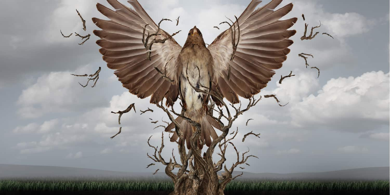 Computer graphics image of a phoenix rising from the dead, symbolising the use of a dissolved company name for a new business